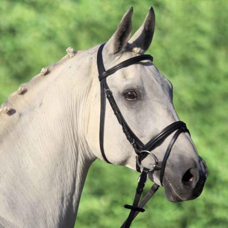 Testiera pony Lifestar Waldhausen
